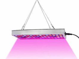 LED Lights To Grow Plant