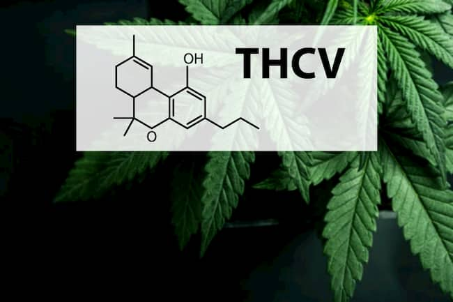 THCV in Cannabis: Cannabinoid Profile, Usage, Effects, Benefits —Explained 1